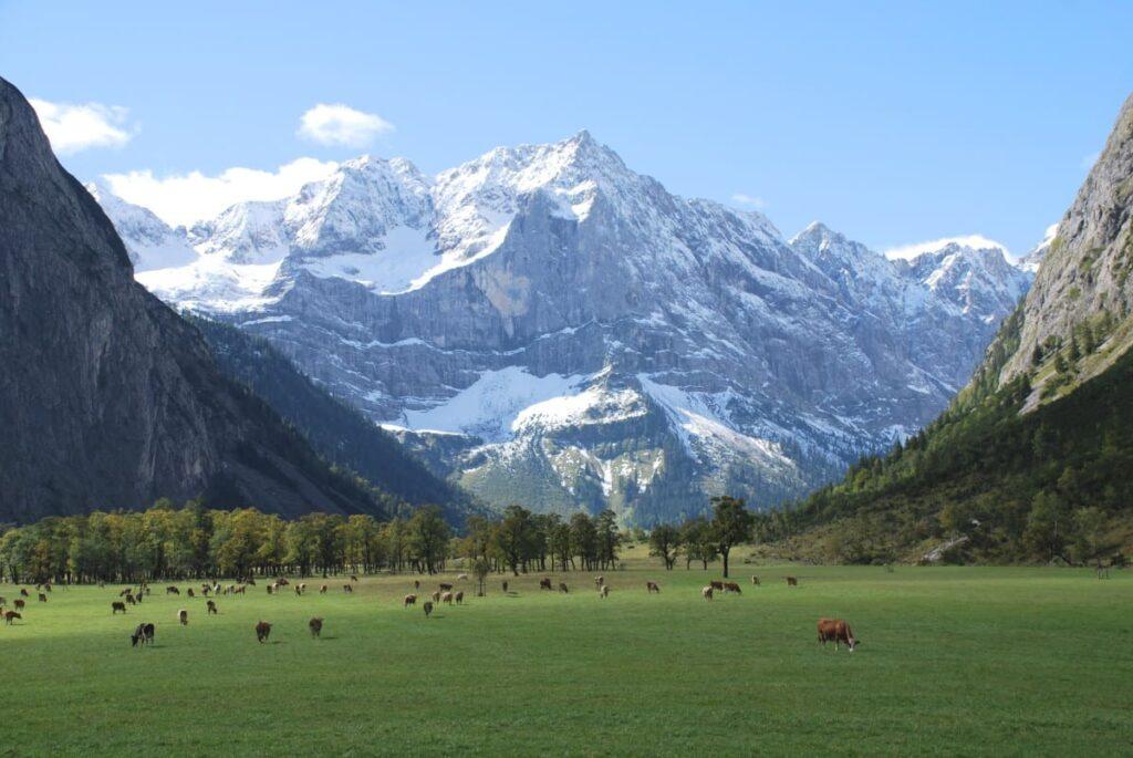 Großer Ahornboden - Dank den Bauern der Eng Alm gibt es diese gepflegte Naturlandschaft